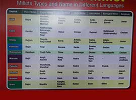 Millets Types and Name in Different Languages